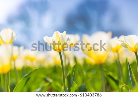 Beautiful closeup of summer flowers with bokeh background. Spring nature concept