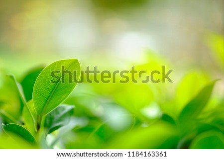Beautiful closeup view of fresh green leaf growing in the garden on the blurred natural green color background #1184163361
