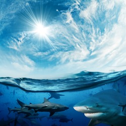 Beautiful cloudy divine background with sunlight and a lot of dangerous sharks underwater design concept