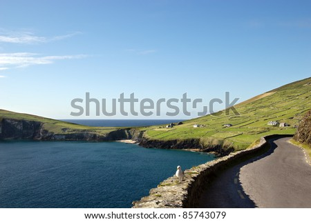 beautiful coastal road on Dingle peninsula, Ireland
