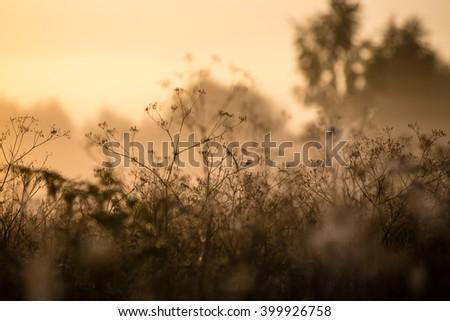 beautiful cobwebs in autumn in frozen meadow #399926758