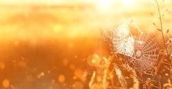 beautiful cobwebs in field, golden sunlight. Dreamy gentle artistic image. summer autumn landscape. fall season. banner. copy space