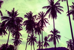 Beautiful coconut palm tree forest in sunshine day clear sky background color tone effect. Travel tropical summer beach holiday vacation or save the earth, nature environmental concept.
