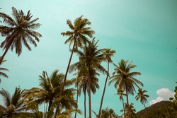 Beautiful coconut palm tree in sunny day background. Travel tropical summer beach holiday or save the earth concept. Vintage tone.