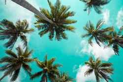 Beautiful coconut palm trees farm, Travel summer holiday concept - Vintage tone