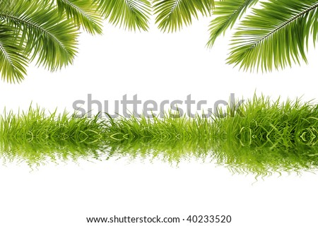 Beautiful coconut tree leaves and grass reflect on white background