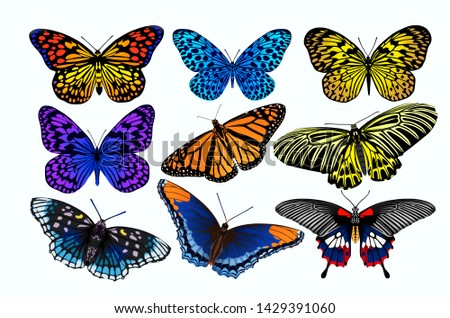 Beautiful collections of tropical butterflies on white background