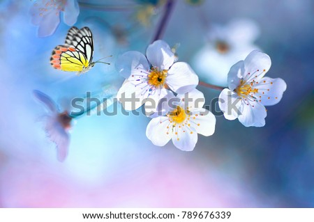 Beautiful colored butterfly  in flight and branch of flowering apple tree in spring at Sunrise on light blue and pink background macro. Amazing elegant artistic image nature in spring