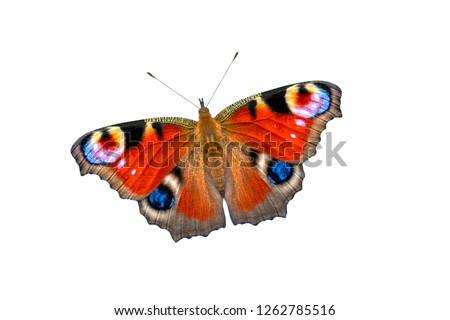 Beautiful colored butterfly on a white background. European Peacock butterfly (Inachis io)