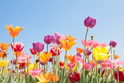 Beautiful colored flowers with copyspace for text