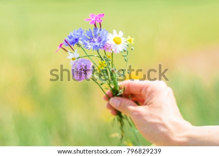 Beautiful colored spring flowers with red purple blue white rose shiny shapes hand picked for a flower bunch in a blooming green park