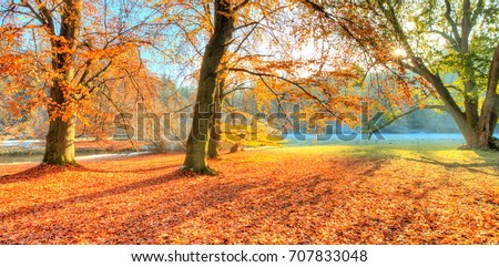 Beautiful colored trees in autumn, landscape photography. Snow on background. Late autumn and early winter period. Outdoor and nature.