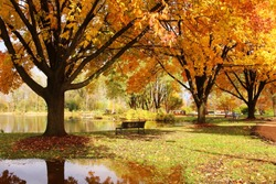 Beautiful colorful autumn nature background. Beautiful autumn landscape with colorful trees around the pond and bench in a city park. Lakeview park, Middleton, Madison area, WI, USA.