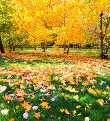 beautiful colorful autumn park in sunny day