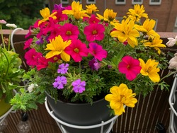 Beautiful colorful balcony flowers in pink yellow purple vibrant color in decorative flower pot white baskets hanging on a balcony fence high angle view, balcony blooming mixed flowers