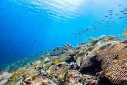 Beautiful colorful coral reef and tropical fish underwater in St Lucia Caribbean