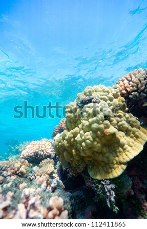 Beautiful colorful coral reef in Pacific ocean - stock photo
