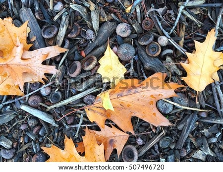 Beautiful colorful fall leaves on a forest floor  #507496720