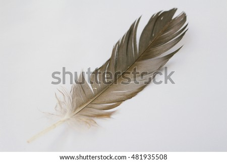 Beautiful colorful feather, close up #481935508