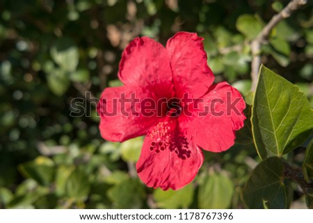 Beautiful colorful flower  #1178767396