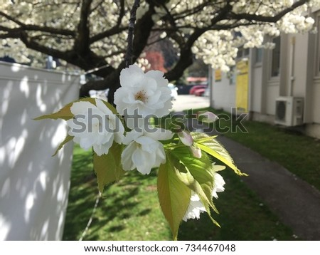 Beautiful colorful flowers in springtime  #734467048