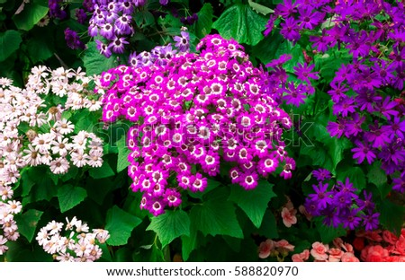 Beautiful colorful flowers in the garden. #588820970