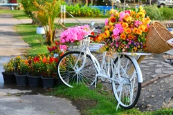 Beautiful colorful flowers on white bicycle concept of wedding and valentine landscape in the garden background