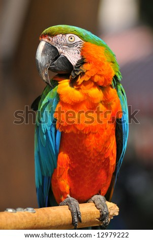 Beautiful colorful Macaw parrot on a sunny morning