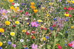 beautiful colorful meadow of wild flowers