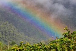 Beautiful Colorful Rainbow with Green Foliage and Blue Sky and Clouds or Mist over Rainforest of Mindo Ecuador