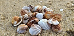 Beautiful colorful seashells on the sand on the beach in the summer, seashells collection, sand background, summer time, white and brown seashells composition close-up