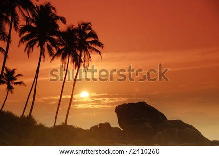 Beautiful colorful sunset over boulders seen under the palms on Sri Lanka