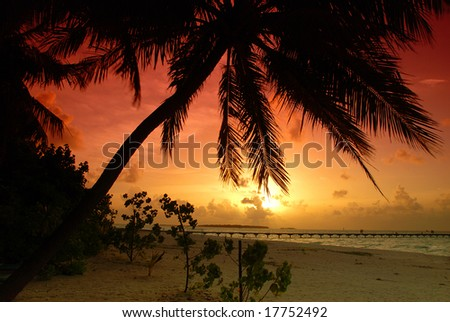 Beautiful colorful sunset over sea and jetty seen under the palm in the Maldives