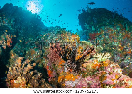 Beautiful, colorful tropical coral reef at the Surin Islands (Richelieu Rock) #1239762175