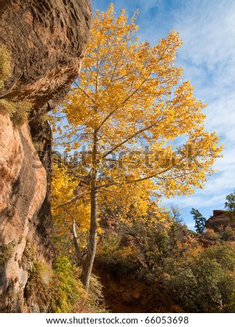 Beautiful colors along the Canyon Overlook trail in Zion Canyon National Park, Utah.