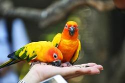 Beautiful Colors Birds in Open Zoo