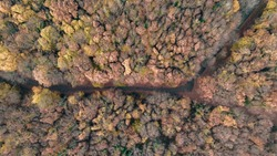 Beautiful colors of autumn in Turkey shot by drone.  Colorful autumn weather in Istanbul. Ataturk Arboretum.Path with tree in the forest