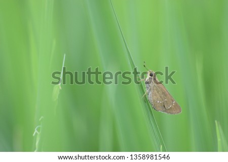 Beautiful colors of butterflies #1358981546