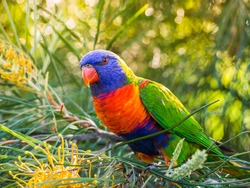 Beautiful colourful parrot over tropical background.