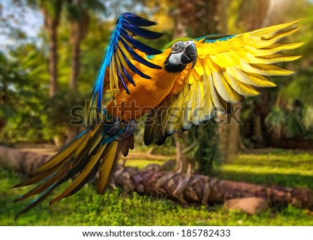 Stock Photo Beautiful colourful parrot over tropical background