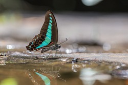 Beautiful Common Blue Bottle butterfly and bokeh in nature background.