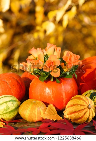 Beautiful composition of fresh orange roses and pumpkins. Thanksgiving decoration with small pumpkin and bouquet of flowers. #1225638466