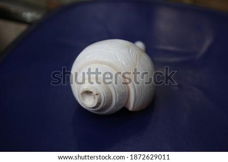 Beautiful Conch Shell or Shankh. Vamavarti Shankh. Stock photo ©