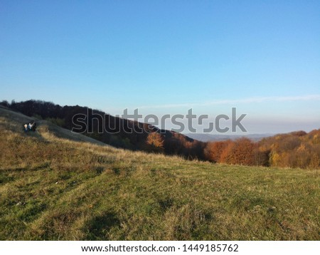 beautiful contrastis captured by me in this photo while hiking in the Carpathian Mountains #1449185762