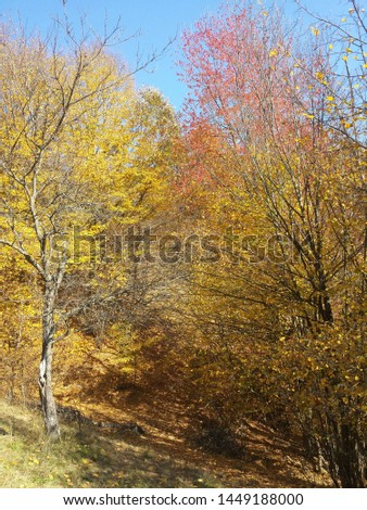 beautiful contrastis captured by me in this photo while hiking in the Carpathian Mountains #1449188000