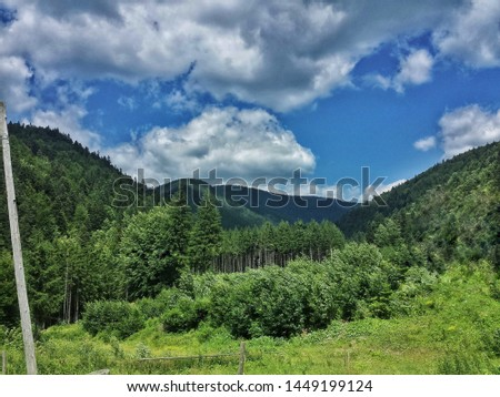 beautiful contrastis captured by me in this photo while hiking in the Carpathian Mountains #1449199124