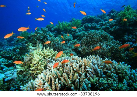 Beautiful Colorful Coral Reefs And Fish Beautiful Coral Reef and