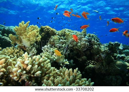 Beautiful Colorful Coral Reefs And Fish Beautiful Coral Reef A...