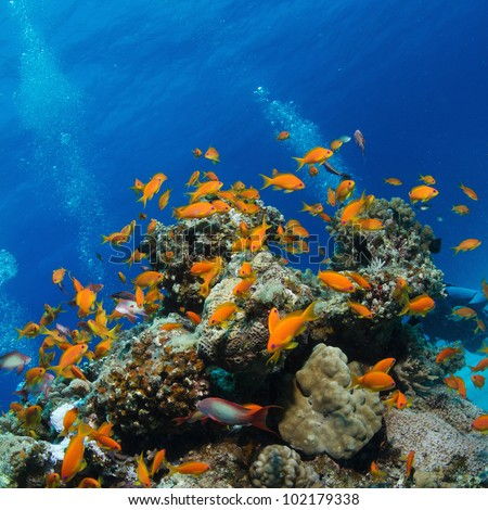 Beautiful Colorful Coral Reefs And Fish Beautiful Coral Reef F...