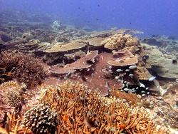 Beautiful coral reef seascape with reef fish